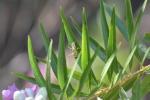 Assasin bug (8)