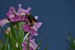 Bumble bee (11)