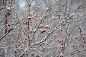 Winter garden (6)